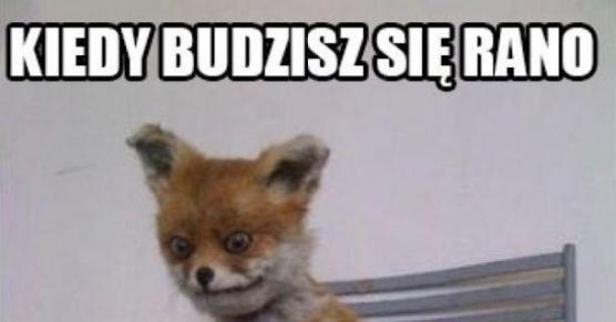 samotne kobiety polska Bielsko-Biała