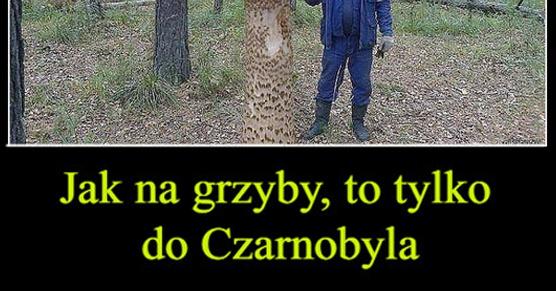 Jak na grzyby, to tylko do Czarnobyla