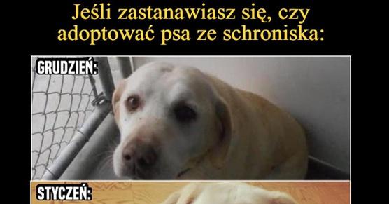 Jeśli zastanawiasz się, czy adoptować psa ze schroniska...