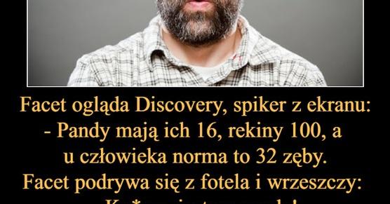 Facet ogląda Discovery, spiker z ekranu: - Pandy mają ich 16, rekiny 100, a u człowieka norma to 32 zęby. Facet podrywa się z fotela i wrzeszczy...