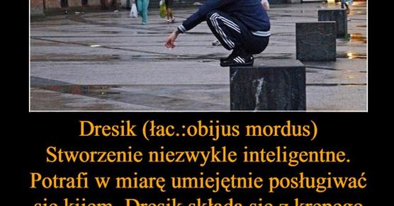 Dresik - Stworzenie niezwykle inteligentne. Potrafi w miarę umiejętnie posługiwać się...