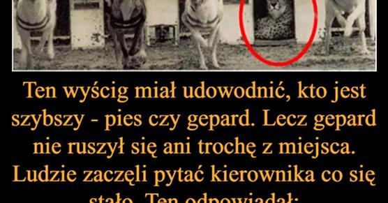 Ten wyścig miał udowodnić, kto jest szybszy, pies czy gepard. Gepard jednak nie ruszył się ani trochę z miejsca. Ludzie zaczęli pytać kierownika co się stało. Ten...