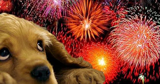 A ja będę strzelał w Sylwestra. Jak te pieprzone psy przez 364 noce w roku szczekają tak głośno, że...