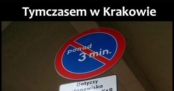 Całuśny tern Kraków