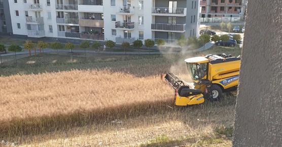 Między blokami w Lublinie ma miejsce dość dziwna sytuacja. Rolnik, który uprawia tam swoje roślinki nie zamierza sprzedawać ziemi deweloperom. W środku osiedla bloków jeździ sobie kombajnem. Kombajn robi bbrrr