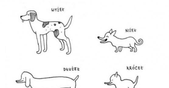 Rasy psa