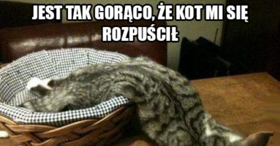 Mój koteł!