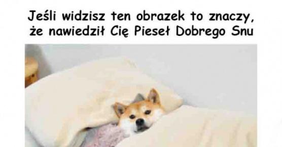 Pieseł Dobrego Snu