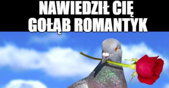 Gołąb romantyk